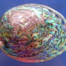 "Seashell Rainbow abalone- Haliotis iris, 5"" (125 mm)"