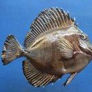 79443 Twotone Tang Zebrasoma scopas 140 mm