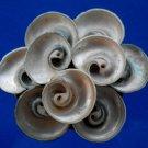 B684 Sailors Valentine Turbo cinereus  cutshells-01, 1 oz