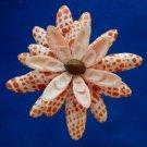 Gems Under the Sea 02107-09 Sailors Valentine Cut shells- Mitra mitra-12, 1 oz.