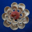 Gems Under the Sea 02818 Sailors Valentine Turbo cinereus cutshells-03
