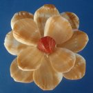 Gems Under the Sea 79980 Sailors Valentine Cut shells Strombus vittatus-07, 1 oz