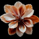 Gems Under the Sea 02684 Cut shells- Sailors Valentine Bractechlamys vexillum-03