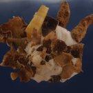 90552 Seashell Xenophora pallidula, 75 mm