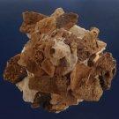 90568  Seashell Xenophora pallidula, 84 mm