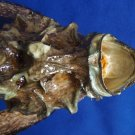 Gems Under the Sea 80943 Hollow-cheek stonefish Synanceia horrida 220 mm