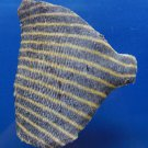 Gems Under the Sea 81657 Fish Skin for Crafts Pomacanthus imperator 96 mm