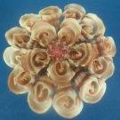 B239 Gems Under the Sea 81736 Sailors Valentine Craft Cut shells - Vexillum plicarium-05, 1 oz,