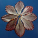 Gems Under the Sea 02911 Cut shells Sailors Valentine Gloripallium pallium-04, 6 pairs