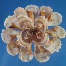 B249 Gems Under the Sea 87413 Craft shells Cut shells- Strombus urceus-13, 1 oz.