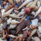 B252 Gems Under the Sea 87536 Assorted Small shells-02, 1 oz.