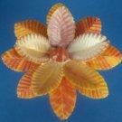 Gems Under the Sea  Mimachlamys sanguinea-26