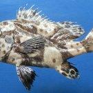 Gems Under the Sea 80880 Harlequin Sweetlips Plectorhinchus chaetodonoides 155 m