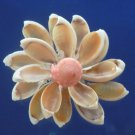 87843 Gems Under the Sea Sailors Valentine Cypraea annulus-05 1 oz