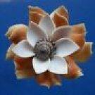 B650 Sailors Valentine Craft shells Cut shells- Strombus vittatus-22,  1/2 oz