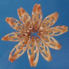 81409 Craftshells Sailors Valentine Cut Slice shell Vexillum sanguisugum-01,1 oz