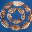 B276 20249 Craft shells- Arca navicularis-02, 1 oz