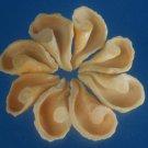 B286  20323 Cut shells - Drupa grossularia-02, 1 oz