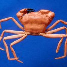 74978 Crab Taxidermy - Carcinoplax aff. verdensis , 33 mm