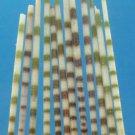 20871 Echinothrix calamaris spine-01, 5 g