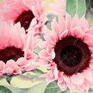New 40 seeds Water Pink Sunflower Seeds houseplants home garden flowers plants