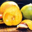 Lucuma (Eggfruit)