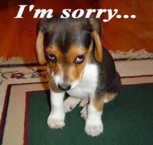 Pet/animal Odor Stain Eliminator/remover Urine Dog Cat!