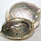 Abalone Shell incense burner