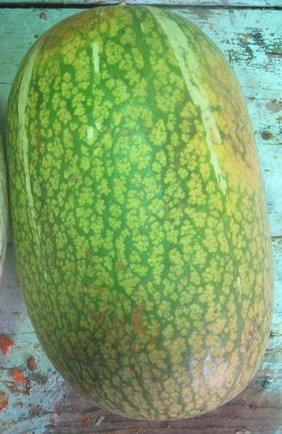 Chilacayote Alcayota Squash untreated seeds