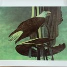 Chester Fields Print Eagle 20in x 24in Signed 185/275