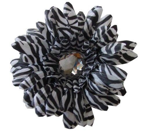 Zebra Daisy