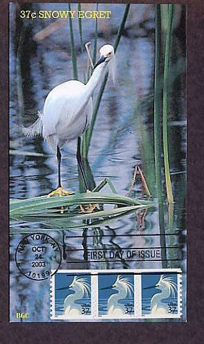 Snowy Egret, First Issue USA