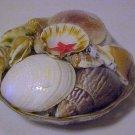 New Basket of Shells Seashells Crafts School Collect Aquariums Plants Gardens