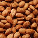Malatya Apricot kernels 1 lb (Raw) a healthy and delicious food