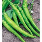 HOT ILICA PEPPER -HEIRLOOM 100 FRESH SEEDS-