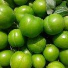 GREEN KASTARCA  PLUM TREE 20 FRESH SEED