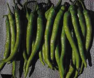 SWEET SURMELI PEPPER -HEIRLOOM 100 FRESH SEEDS-