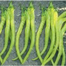 YELLOW PEPPER (CORBACI) SWEET-HEIRLOOM 100 FRESH SEEDS-