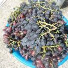 HOROZKARASI GRAPES VINE 20 FRESH SEEDS