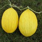 DAVUTBEY MELON 30 FRESH SEEDS