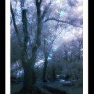 A4 Framed Landscape Print - Enchanted Forest