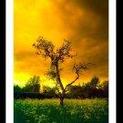 A4 Framed Color Infrared Landscape Print - Lone Tree