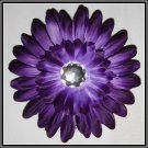 20 Purple Gerber Daisy