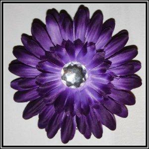 20 Purple Gerber Daisy