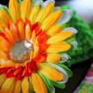 Gerbera Spring Daisy Clippie