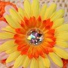 Gerbera Sunburst Daisy Clippie