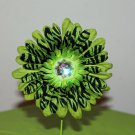 Gerbera Green Zebra on Green Daisy Clippie