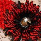 Gerbera Red Zebra and Black Daisy Clippie