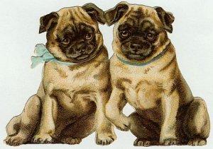4 x 5 1/2 Victorian Pug Puppy Dogs Cotton Fabric Panel