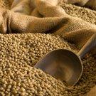 Brazil Santos Green (Unroasted) Coffee Bean